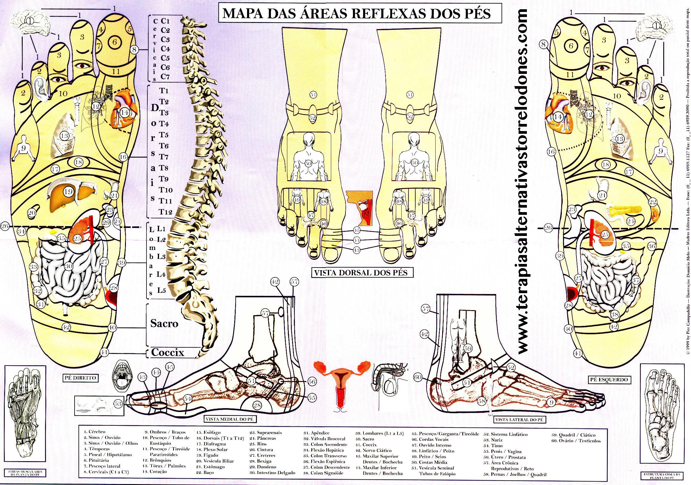Mapa Reflexologia Podal Pdf.Reflexologia Podal Terapias Alternativas Torrelodones